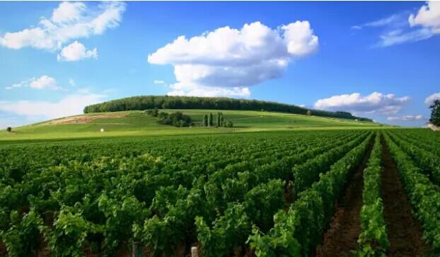 勃艮第:世界上最贵的葡萄园已连续18年价格上涨